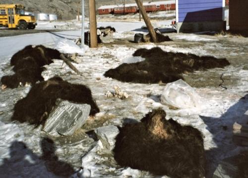2003 marts Grønland (10)