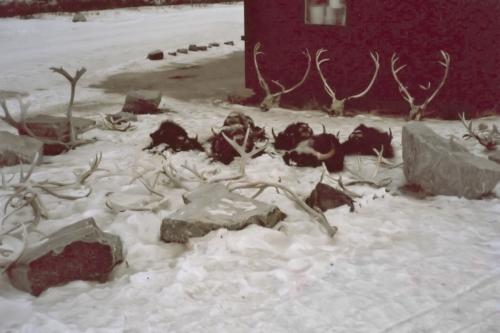 2003 marts Grønland (022)