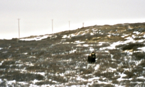 2003 marts Grønland (026)