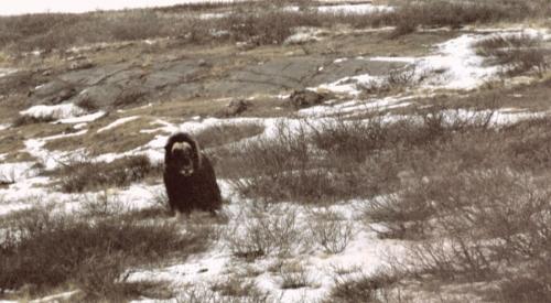2003 marts Grønland (037)