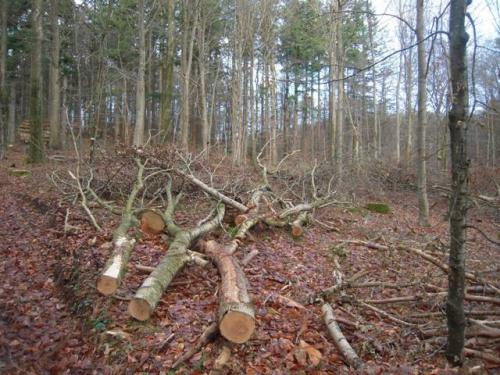 2013 - Bjerre skov