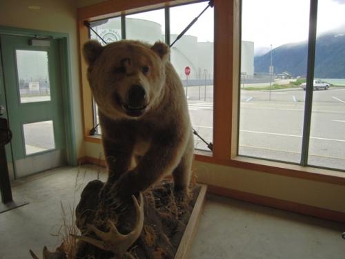 Hov, der var da en enkelt bjørn