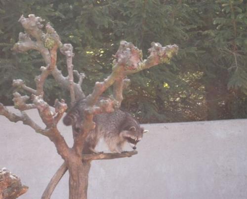 Skærbæk Zoo