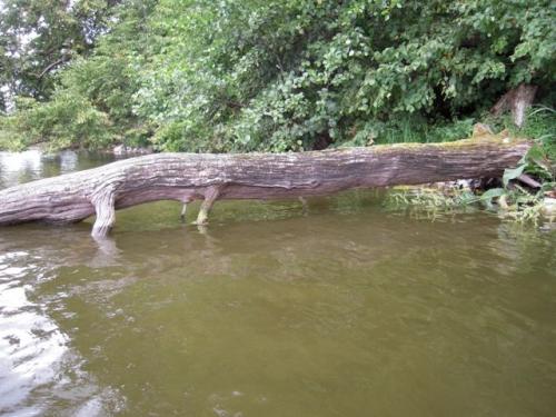 Krokodille?