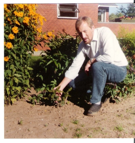 1988-egetræ