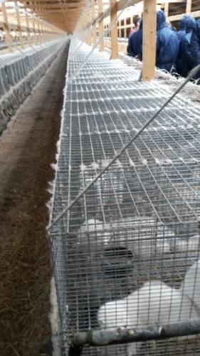 2015 2210 Minkfarm Hedensted (13)